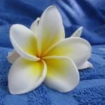 flower-409379_640